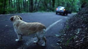 Pescara: vede un uomo abbandonare il cane lungo la strada, lo insegue e lo manda all'ospedale…