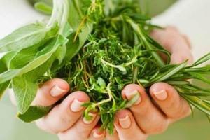 Reumatismi, artrite e dolori da freddo: 5 piante per curarli….